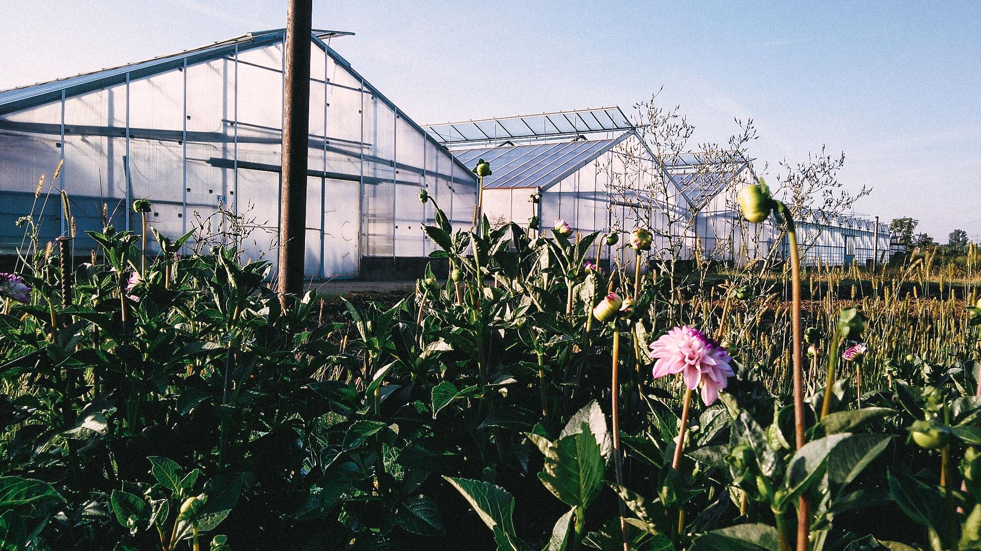 floralita-07