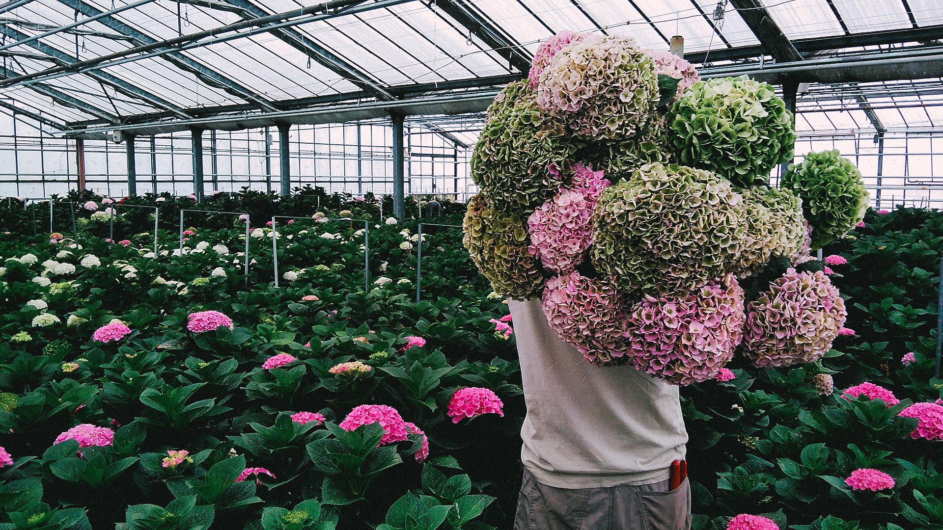 floralita-09