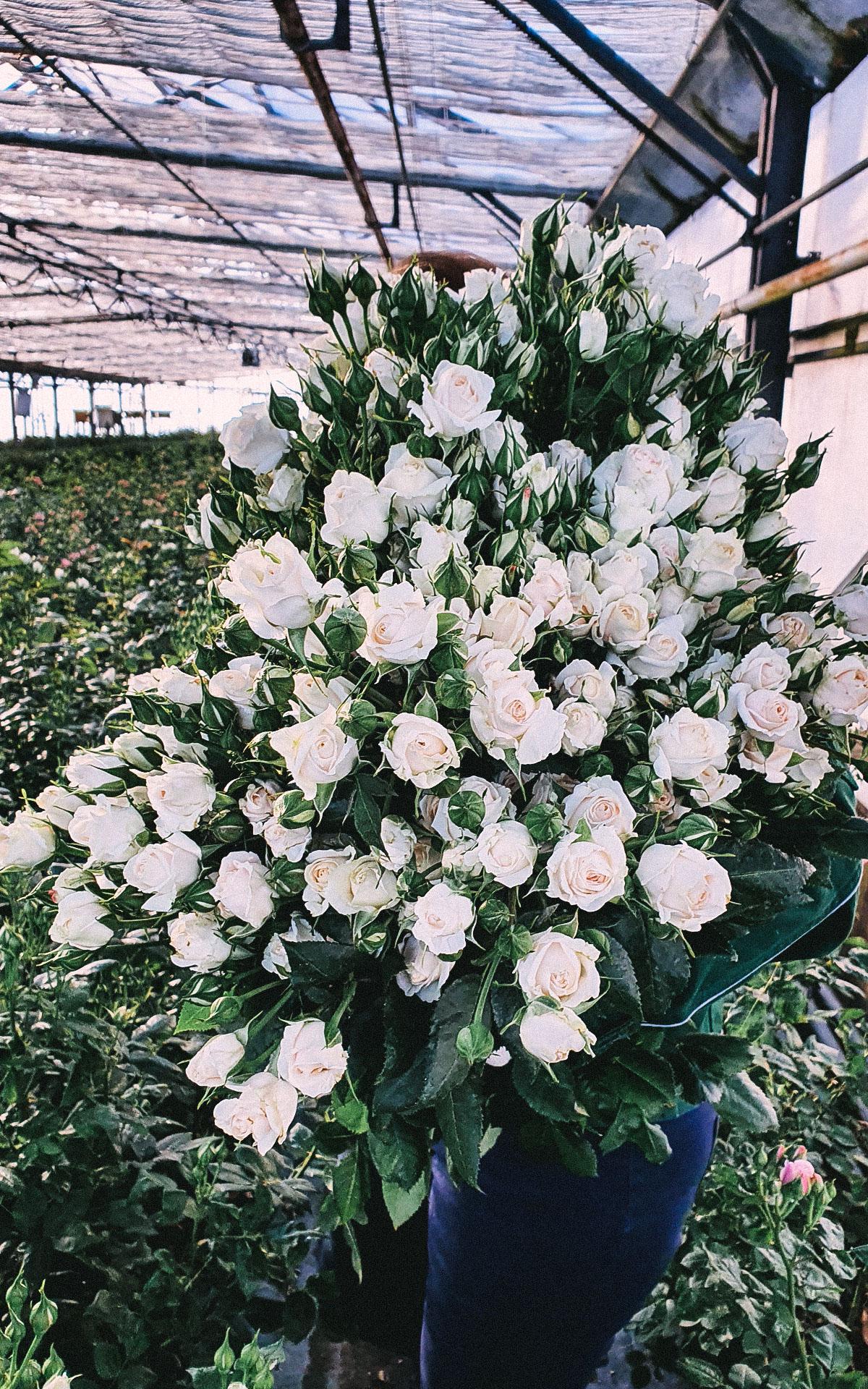 floralita-11