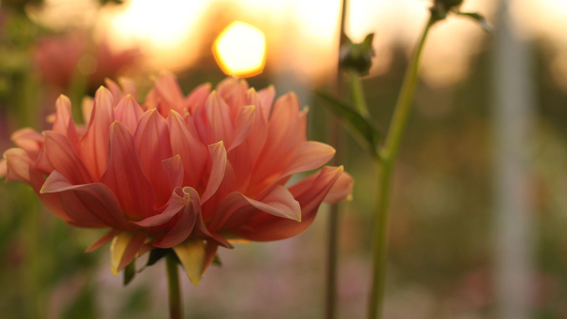 laendlicheblumen-01