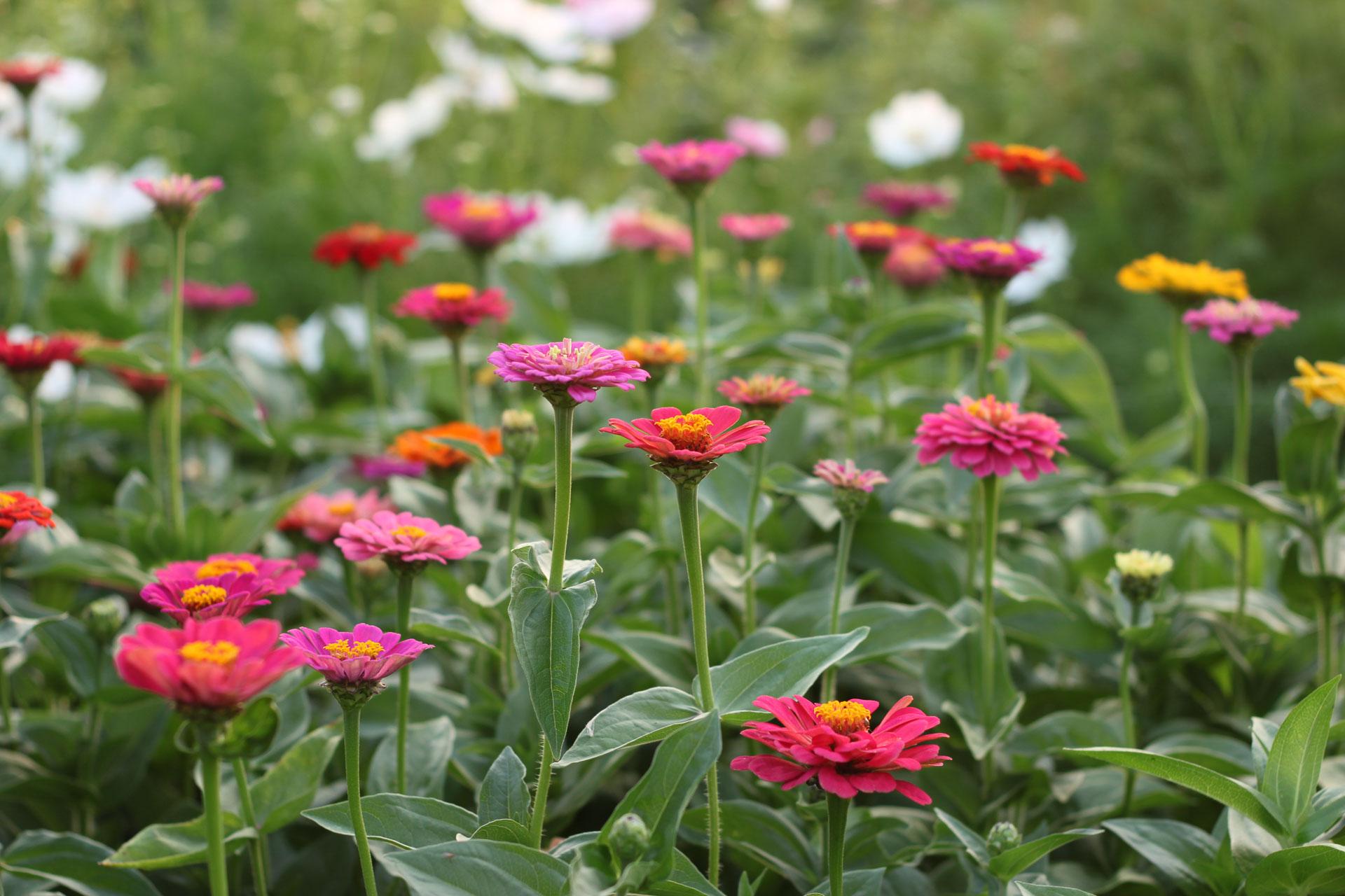 laendlicheblumen-09