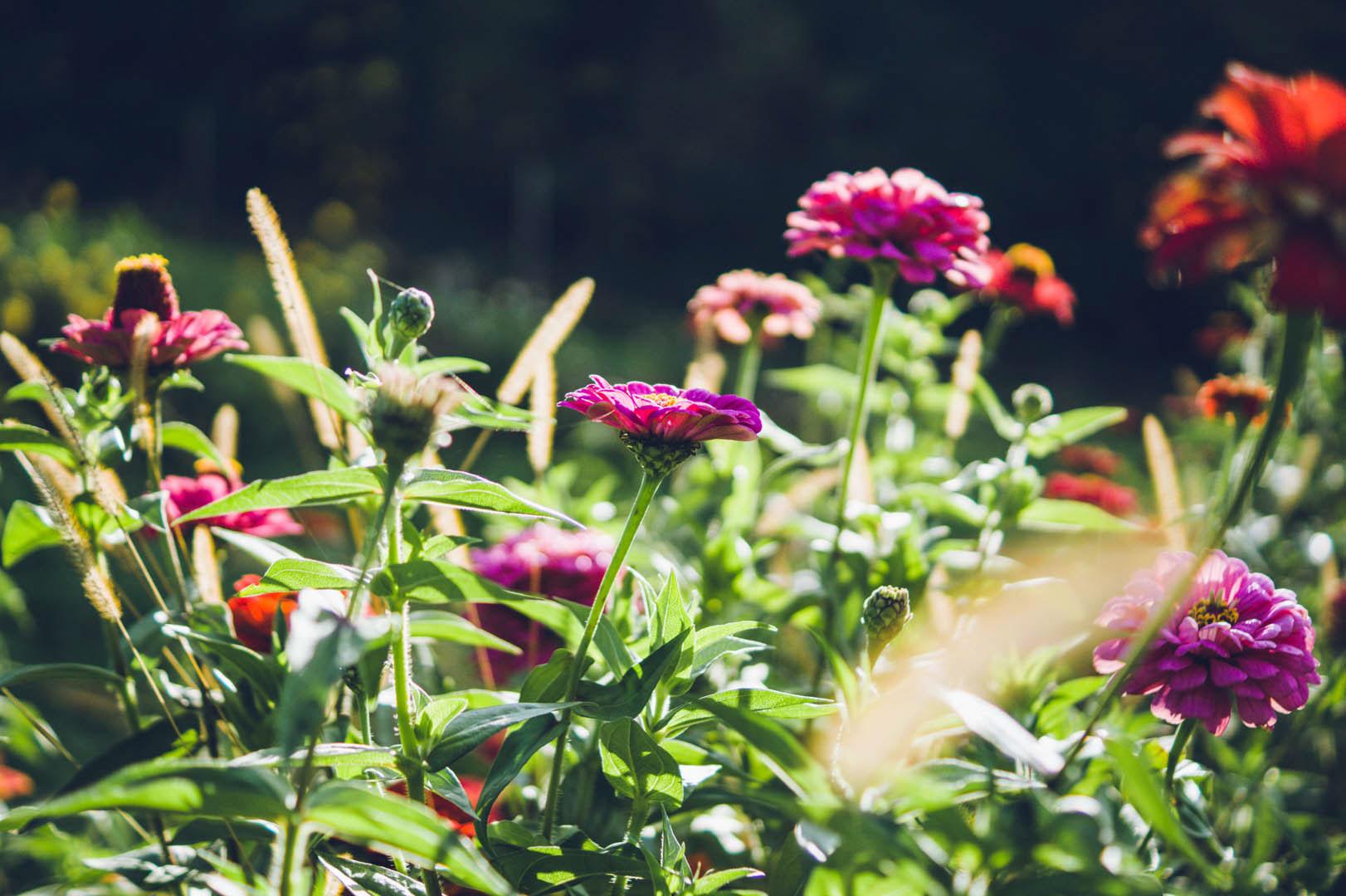 flowerandsoul-01