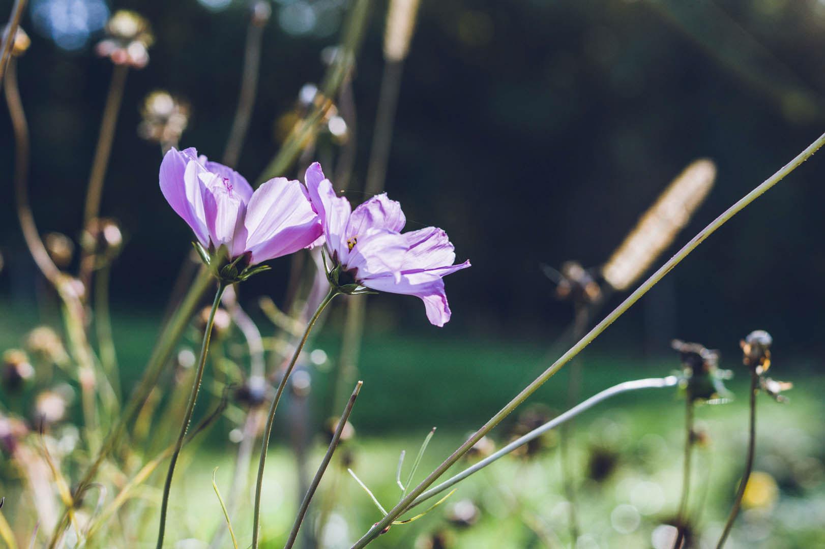 flowerandsoul-02