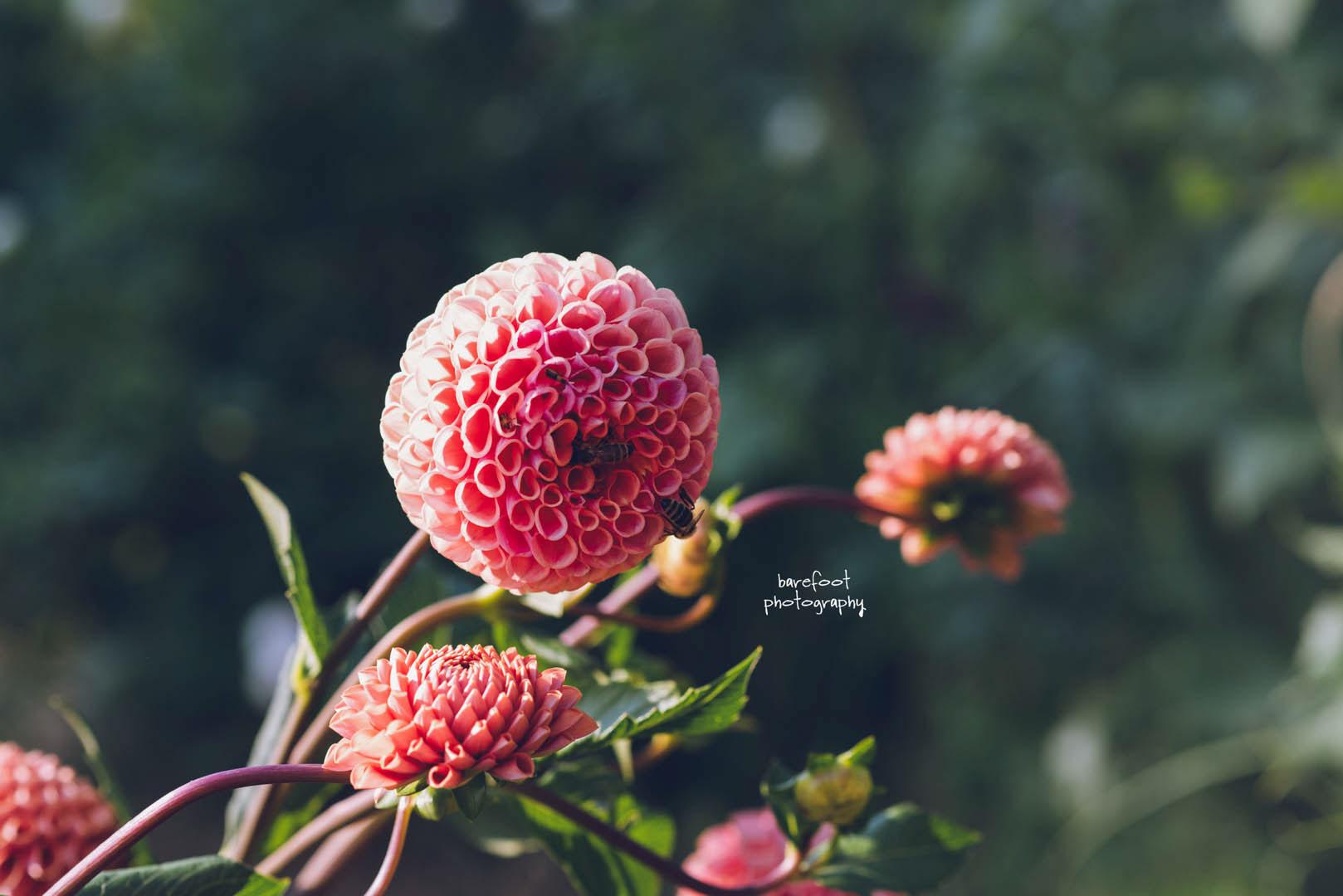 flowerandsoul-04