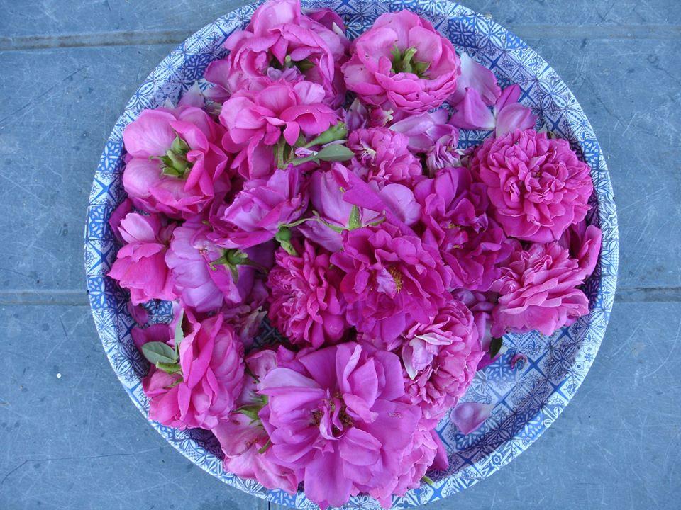 rosenblüten-für-rosengelee